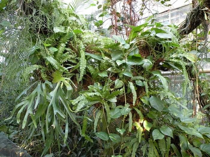 paprocie-palmiarnia.jpg