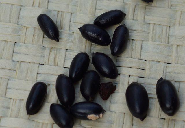 piwonia-nasiona.jpg