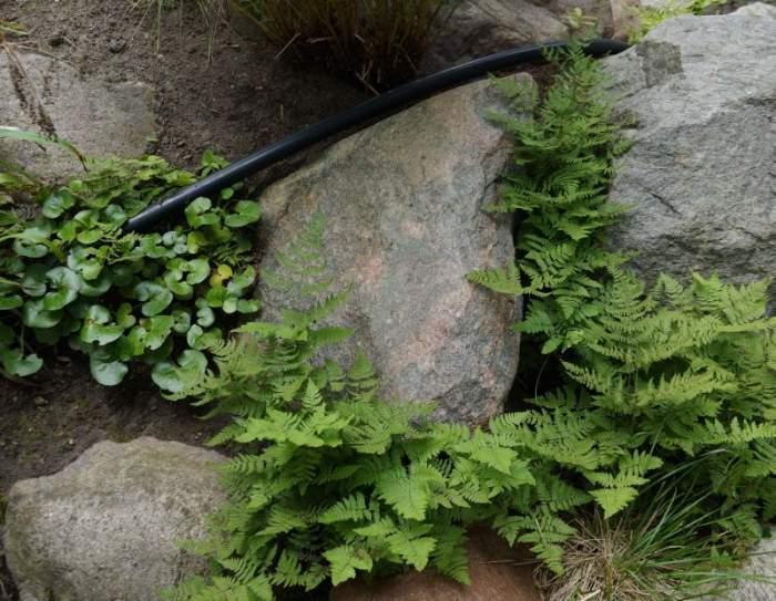 podlewanie-alpinarium.jpg