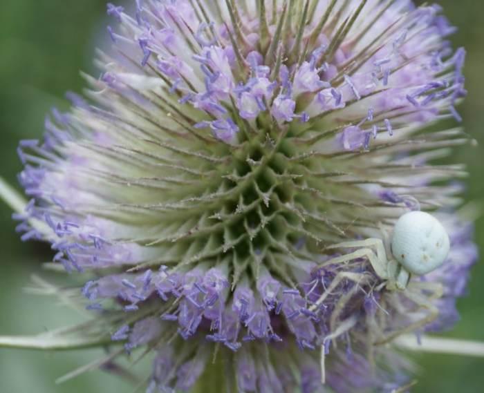 szczec-kwiat.jpg