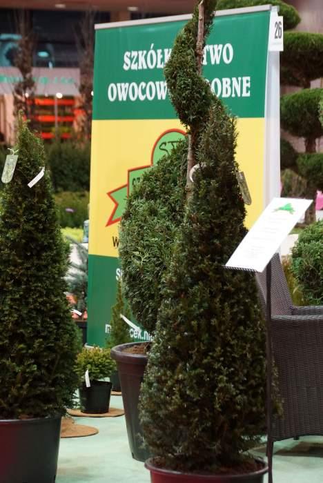 topiary2.jpg