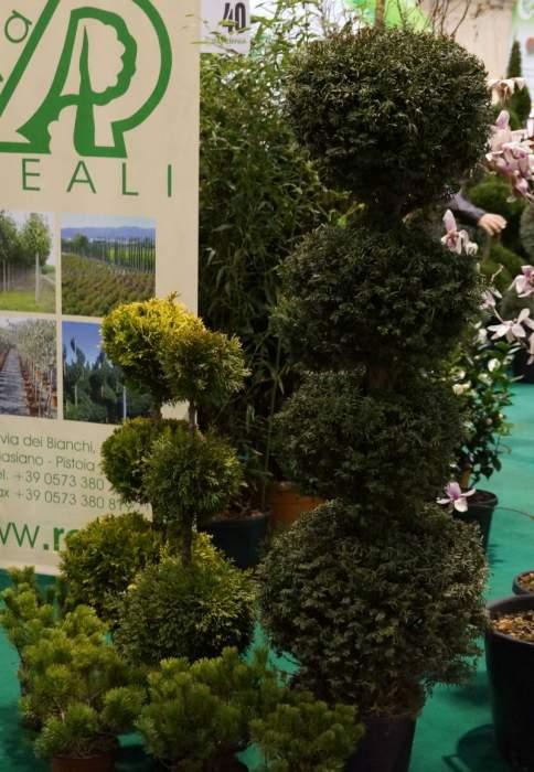 topiary4.jpg