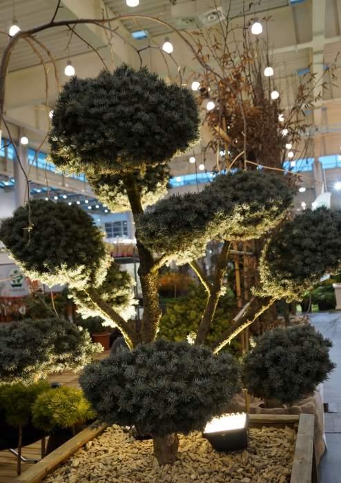topiary5.jpg