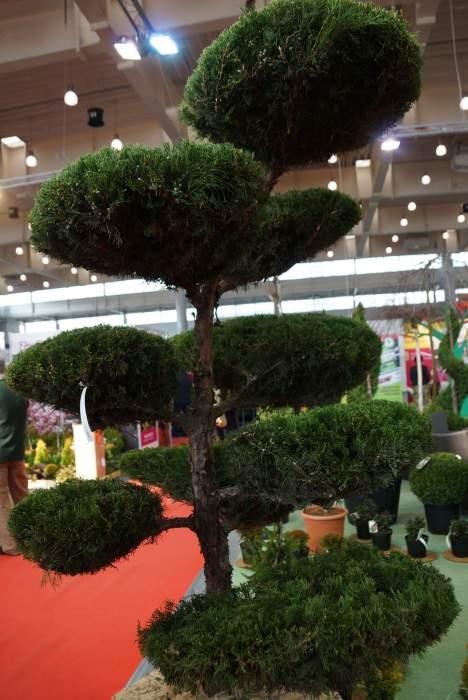 topiary6.jpg