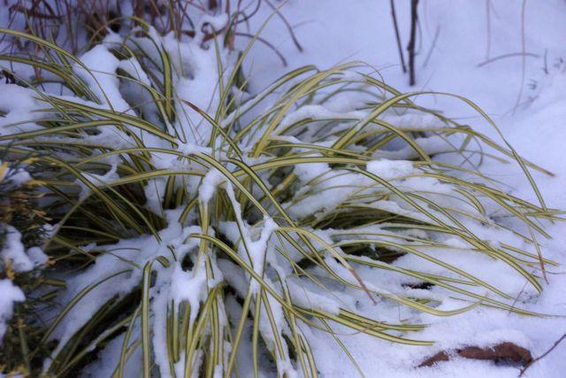 trawa-snieg.jpg