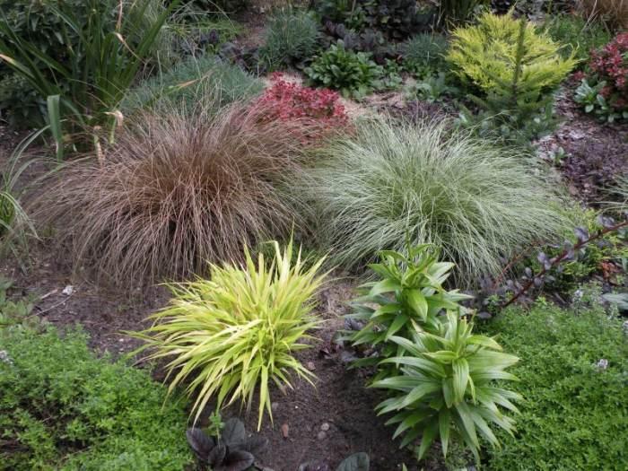 trawy-nowozelandzkie.jpg