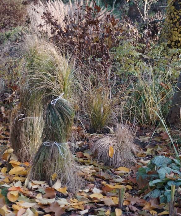 trawy-zwiazane-do-zimy.jpg