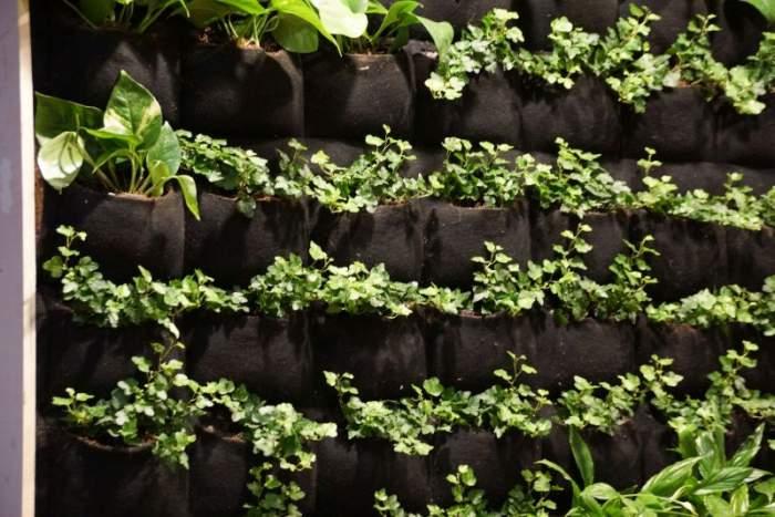 vertical-garden1.jpg