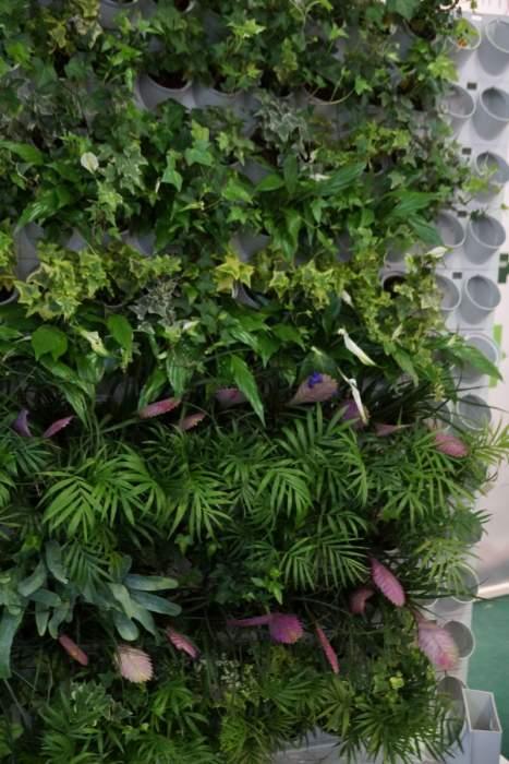 vertical-garden2-sciana.jpg