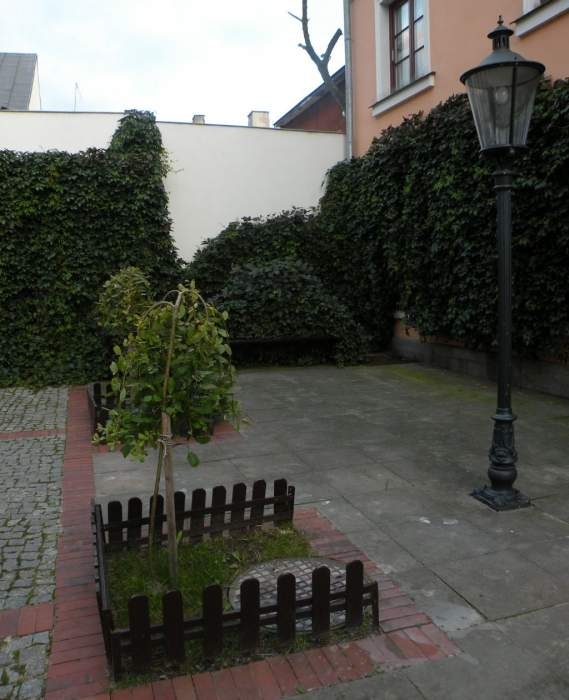 winobluszcz-murek-2.jpg