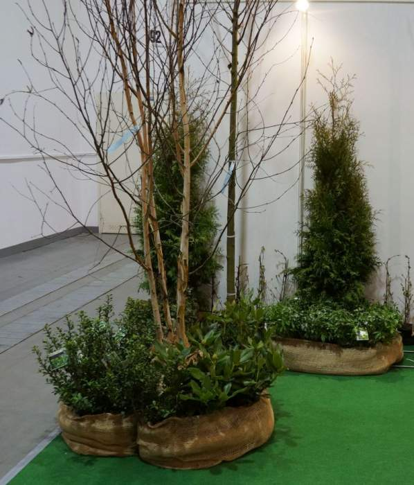 zimozielone-krzewinki-krzewy1.jpg