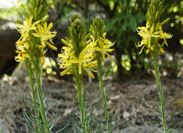 zlotnicazolta-kwiaty.jpg