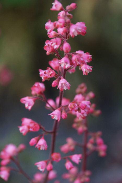 zurawka-paris-kwiaty-1.jpg