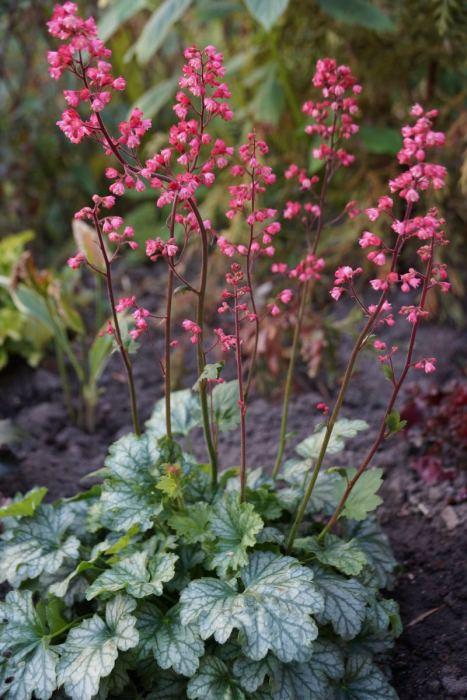 zurawka-paris-kwiaty.jpg