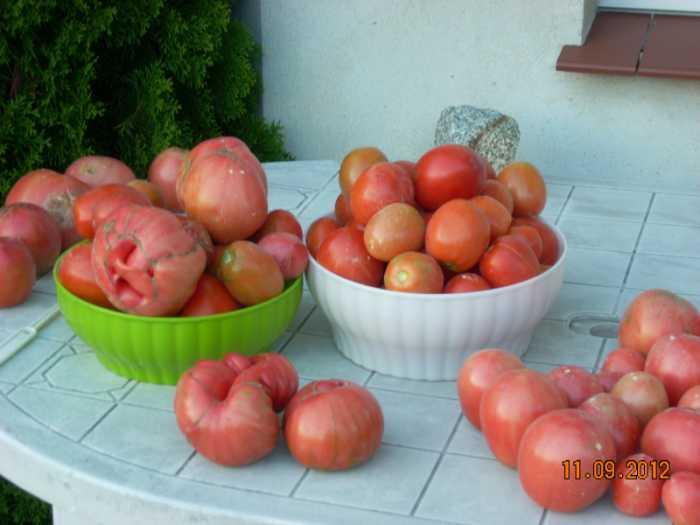 pomidorywrzesie2012012a.jpg