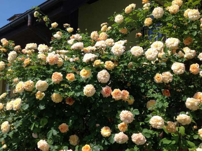 image_2014-05-30-2.jpg