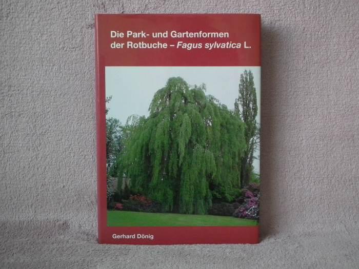 Rotbuche006.jpg