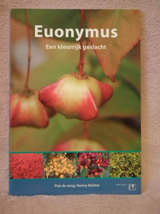 euonymus006.jpg