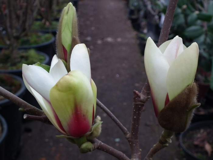 magnoliaSunrise004.jpg