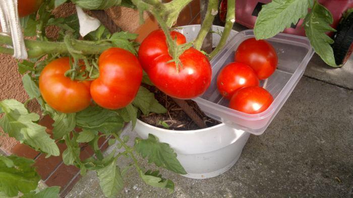 suszonepomidory007.jpg