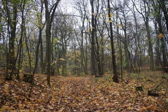 radojewo-jesien1.jpg