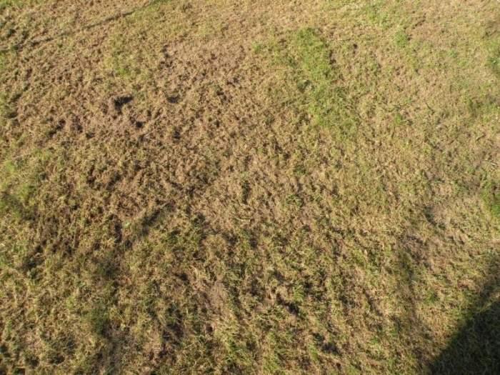 trawnik-wertykulacja1.jpg