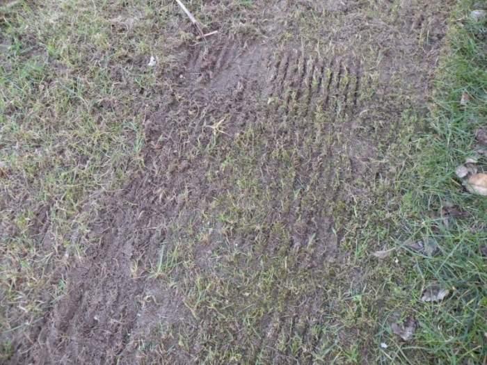 trawnik-wertykulacja2.jpg