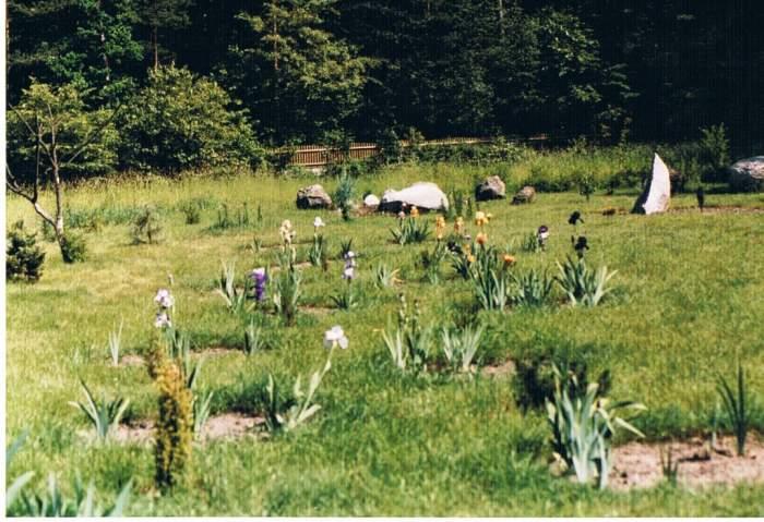 koa2002.jpg