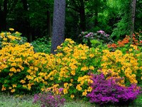 ArboretumwRogowie.JPG