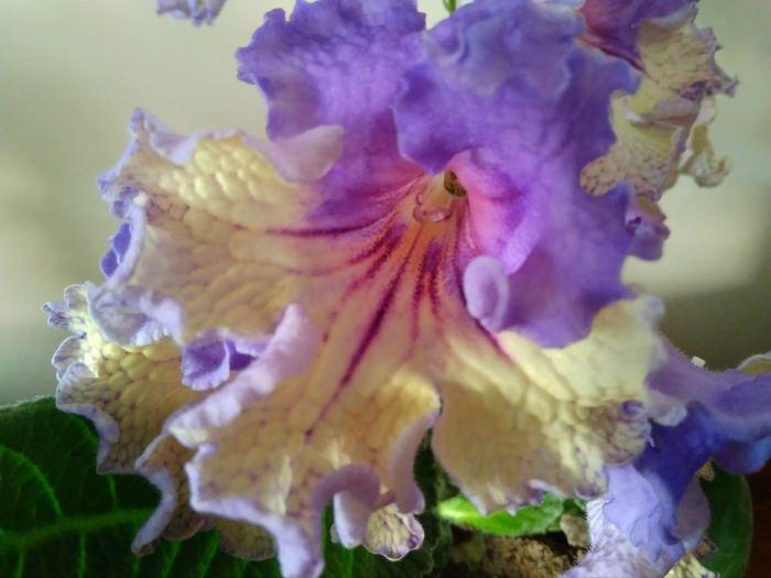 7152-kwiat.jpg
