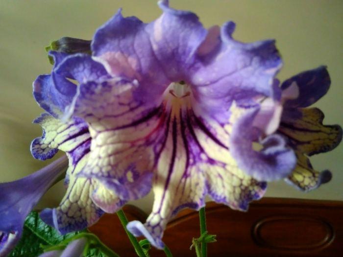 Ds-Machaon-kwiat.jpg