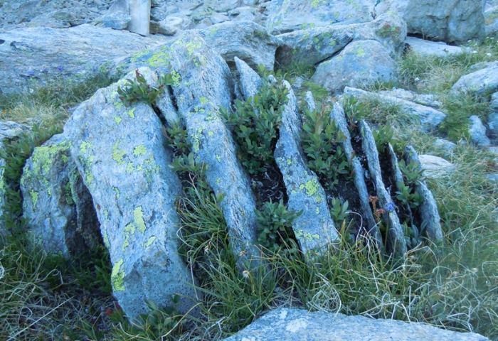 crevice-Mparadiso.jpg