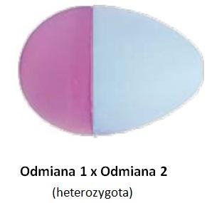 heterozygota.jpg