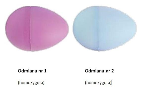 homozygoty.jpg