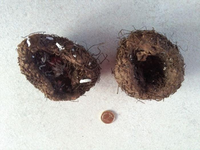 begonia-2.jpg