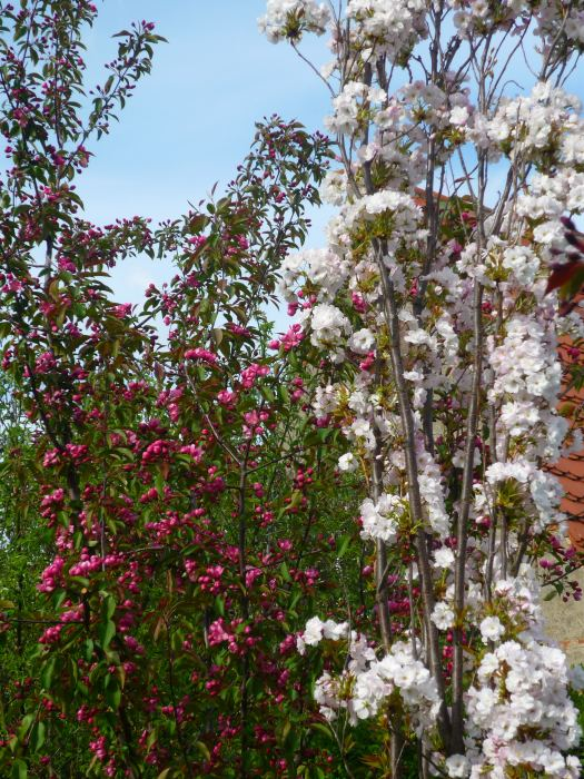 jaboiamanogkwiaty-2.jpg