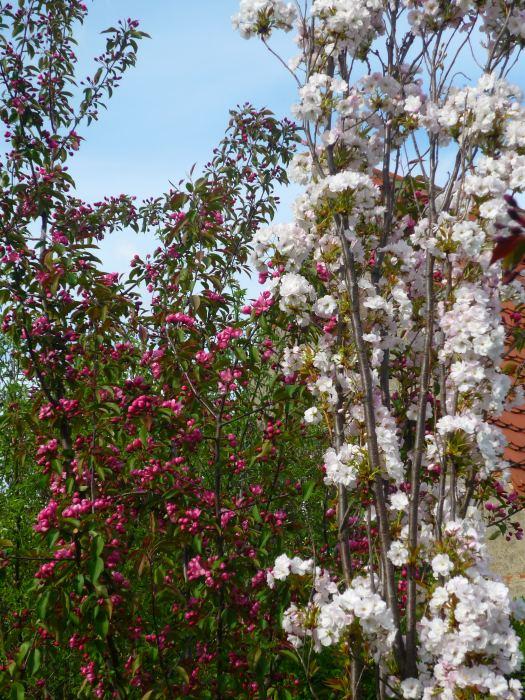 jaboiamanogkwiaty-3.jpg