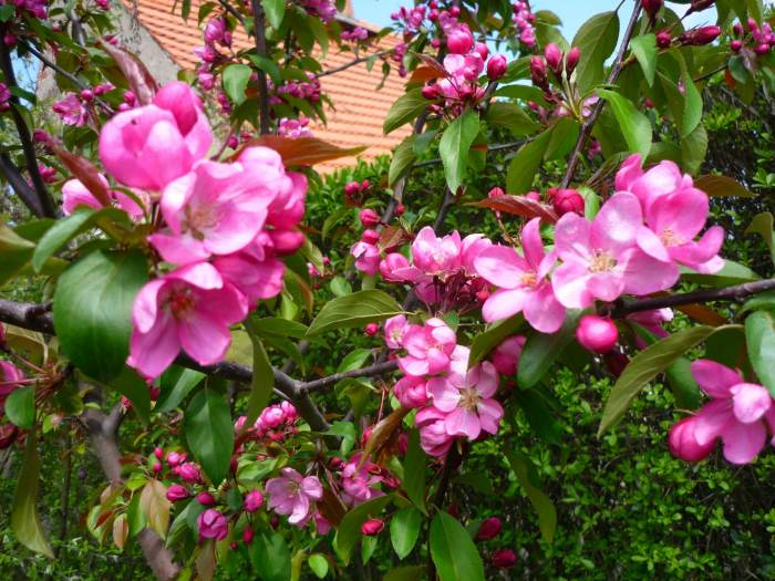jaboozdobnakwiaty-2.jpg