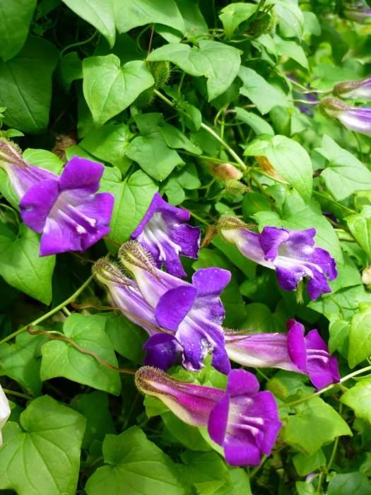 kwiatyasariny.JPG