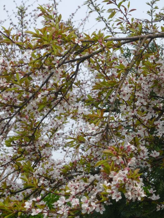 liwahesseikwiaty-2.jpg