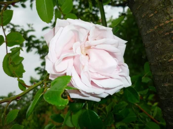 raNewdawnkwiat.JPG