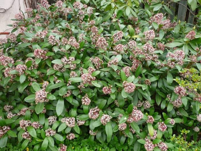 skimiawkwiatach-2.jpg
