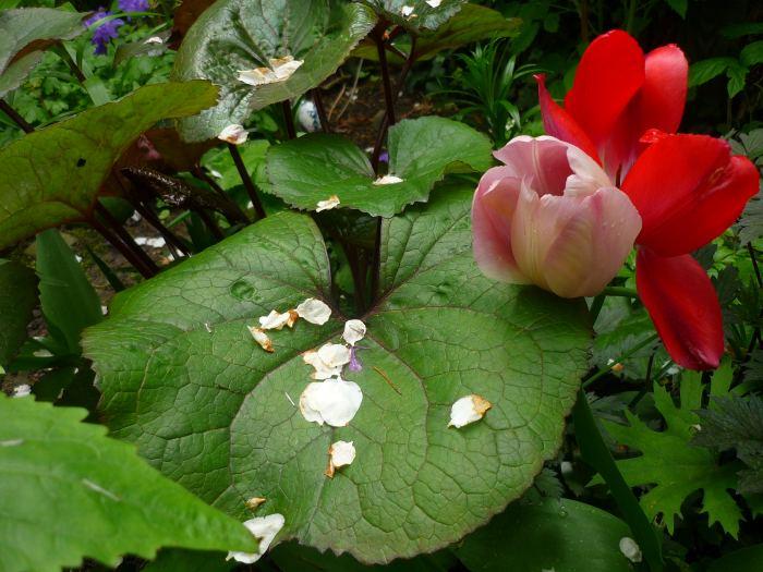 tuliwjzyczkach.jpg