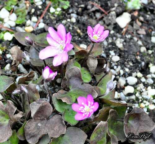 DSC_0005_2012-03-21.jpg