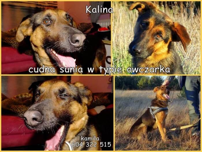 kalina-3.jpg