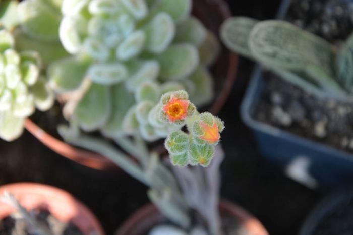 kwiateszeweria.jpg