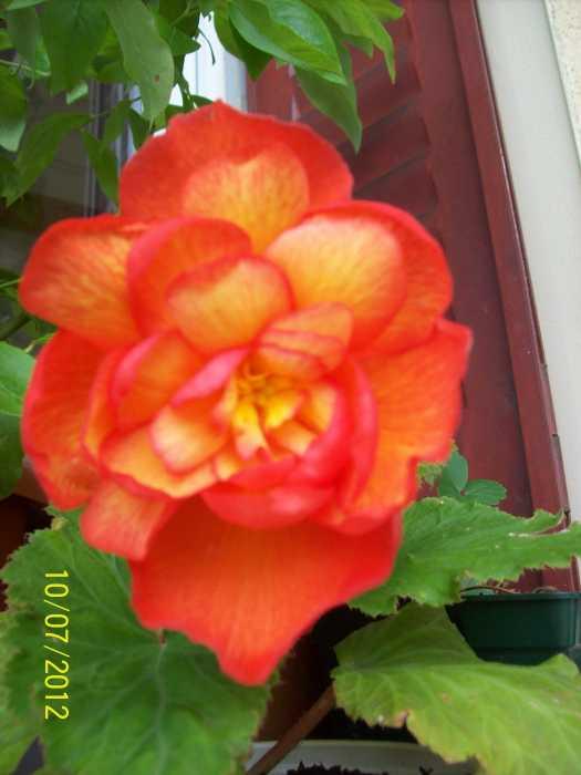 100_4552_2012-07-10.JPG