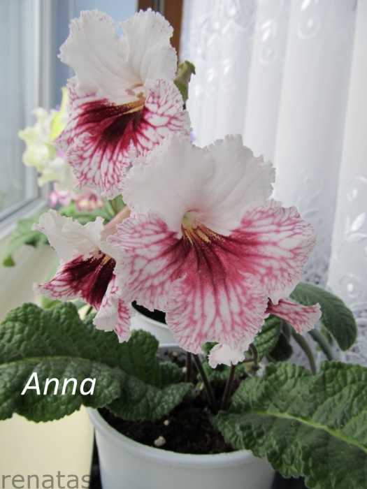 anna_2012-06-17.jpg