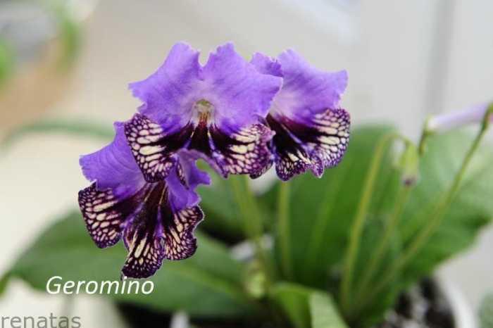 geromino_zmniejszacz-pl_524343_2012-06-17.jpg