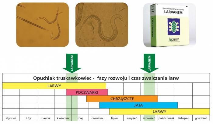 Larvanem-tabela-stosowania-1.jpg